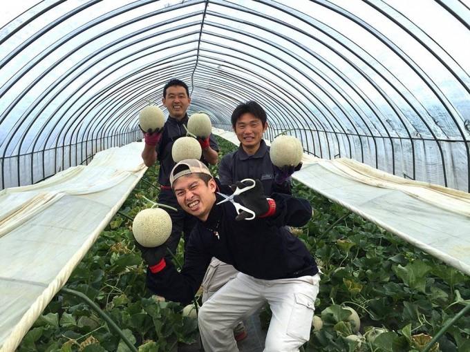 メロン収穫2