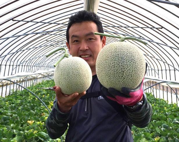 メロン初収穫