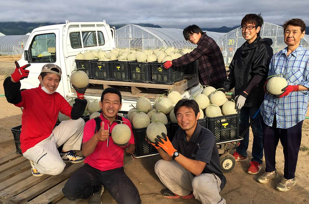 メロン収穫3