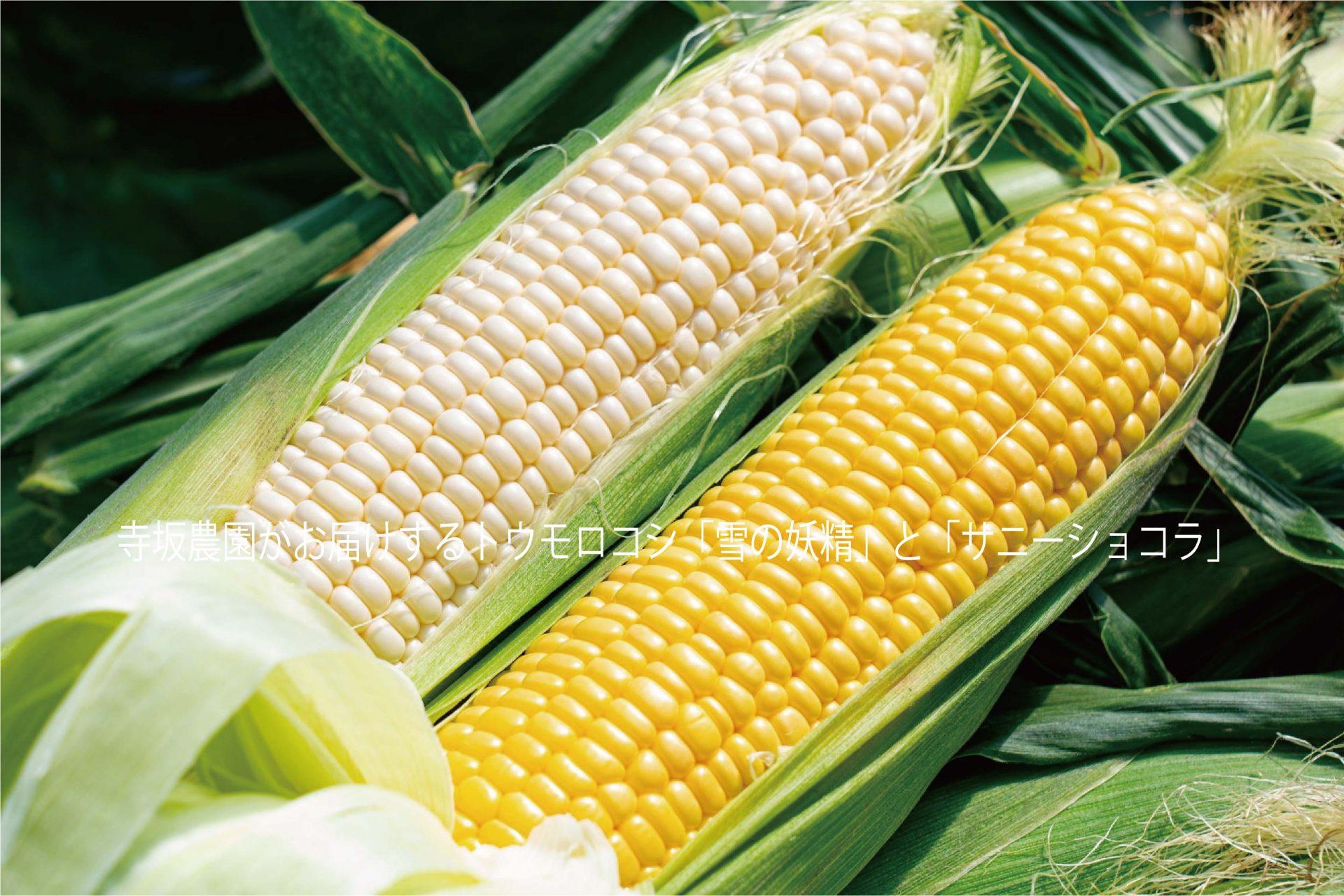 黄色と白のトウモロコシ