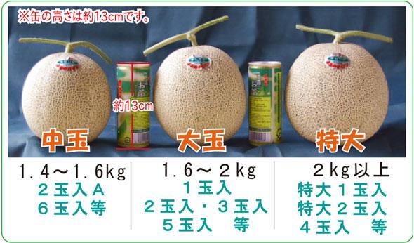http://furano-melon.jp/wp/wp-content/themes/terasaka/images/product/melon/sizeCompare.jpg