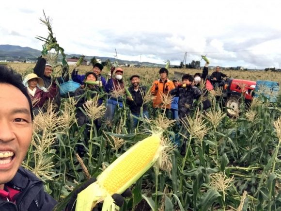 トウモロコシ収穫