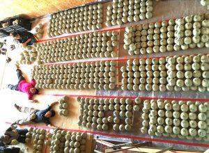 メロン800玉収穫