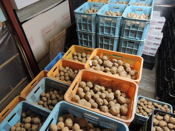 低温倉庫にジャガイモを保管している写真