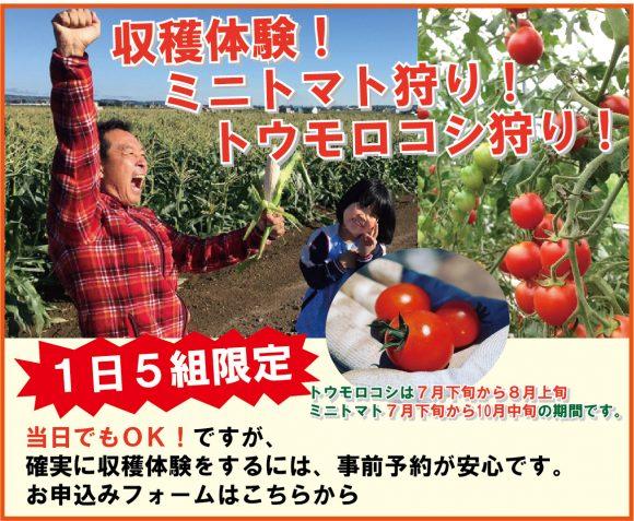収穫体験トマト狩り、トウモロコシ狩りのページ。