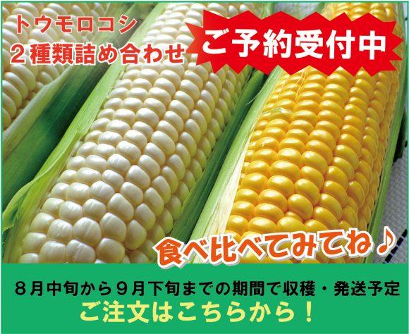 トウモロコシ二種類詰め合わせ