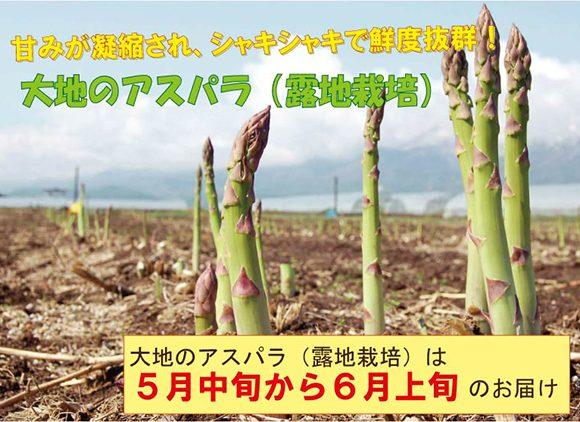 大地のアスパラ(露地栽培グリーンアスパラガス)5月中旬から6月上旬のお届け予定