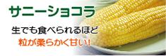 黄色いトウモロコシ「サニーショコラ」バナー