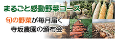 まるごと感動野菜コース