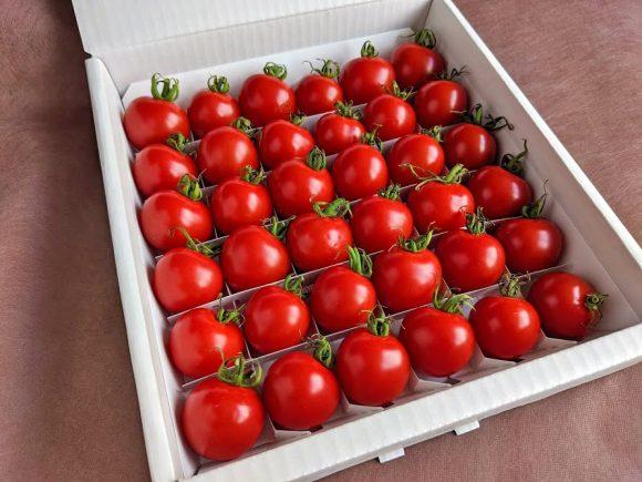 厳選ミニトマトほれまるギフト