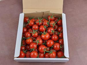 ミニトマトほれまる1kg