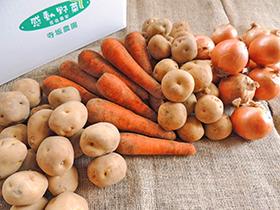 旬の秋野菜ギフト10kg